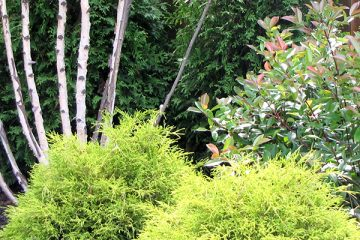 Tree / Shrub / Property Maintenance