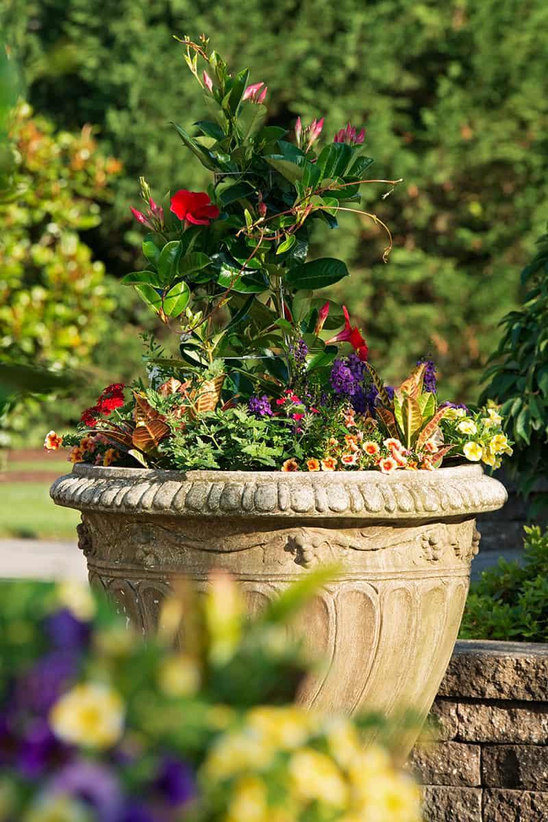 Superieur Container U0026 Specialty Gardening