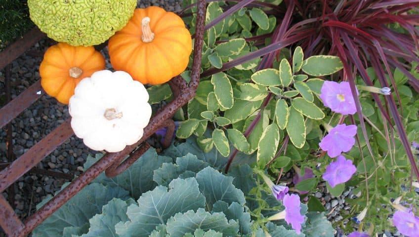 Welcome To Calgo Gardensu0027 Blogu2026eARTth!