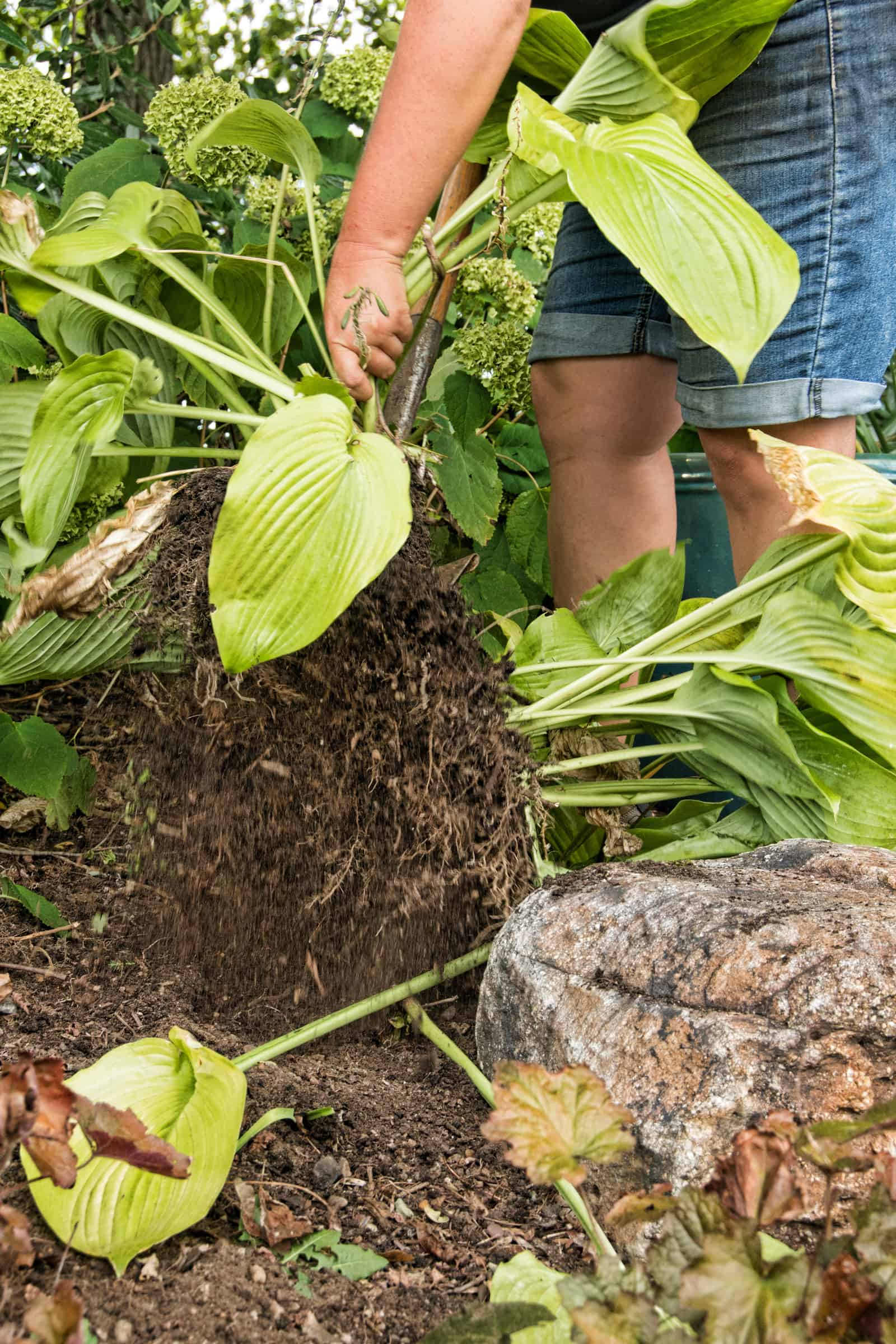 Divide and Conquer – End of Summer Yard Maintenance - Calgo Gardens